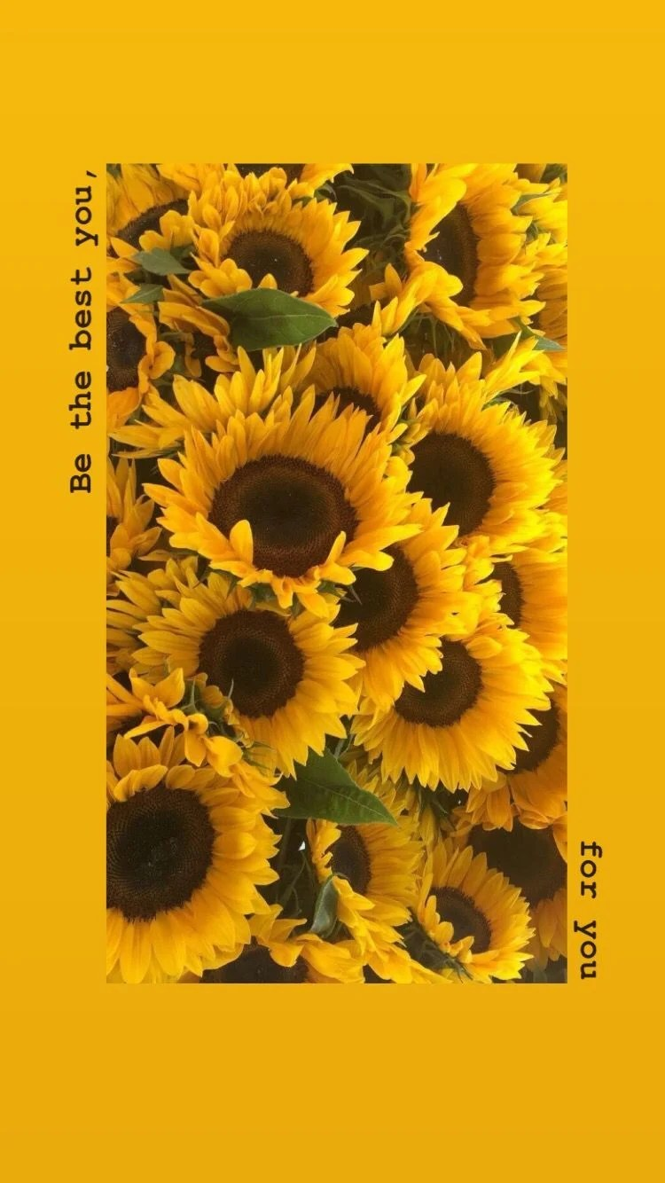 36 Best Sunflowers background ideas | sunflower wallpaper