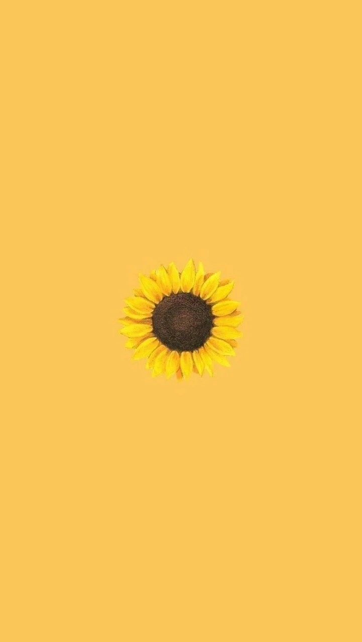 Sunflower Tumblr Background : sunflower, tumblr, background, Yellow, Sunflower, Aesthetic, Wallpapers, Backgrounds, WallpaperAccess