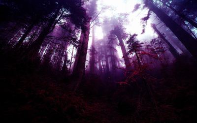 forest purple wallpaperaccess manipulation fantasy wallpapers