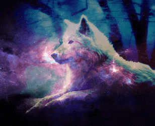 Cute Galaxy Wolf Wallpapers Top Free Cute Galaxy Wolf Backgrounds WallpaperAccess