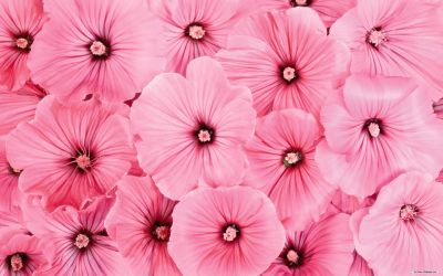 Cute Pink Flower Wallpapers Top Free Cute Pink Flower Backgrounds WallpaperAccess