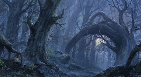 Enchanted Forest Wallpapers Top Free Enchanted Forest Backgrounds WallpaperAccess