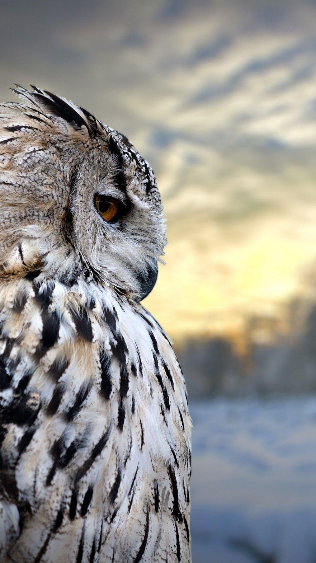 Owl Screensaver : screensaver, IPhone, Wallpapers, Backgrounds, WallpaperAccess