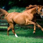 Running Horse Wallpapers Top Free Running Horse Backgrounds Wallpaperaccess