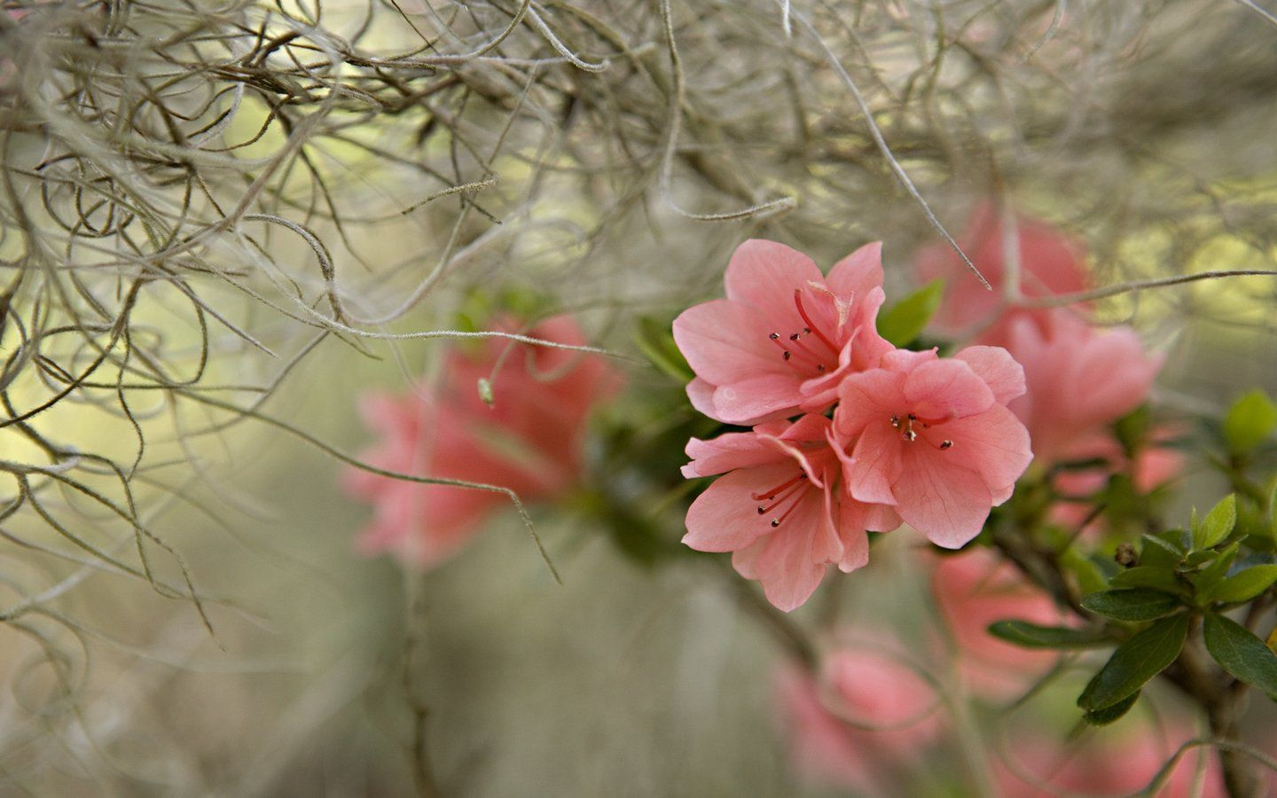 pic Spring Scenery Wallpaper scenic spring wallpapers top free