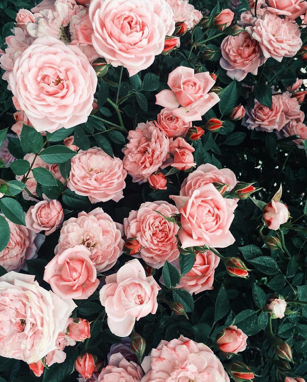 Jazz up your computer, phone or tablet by creating a wallpaper design unique to your taste and style. Pink Flowers Aesthetic Wallpapers - Top Free Pink Flowers ...