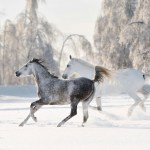 Winter Horse Wallpapers Top Free Winter Horse Backgrounds Wallpaperaccess