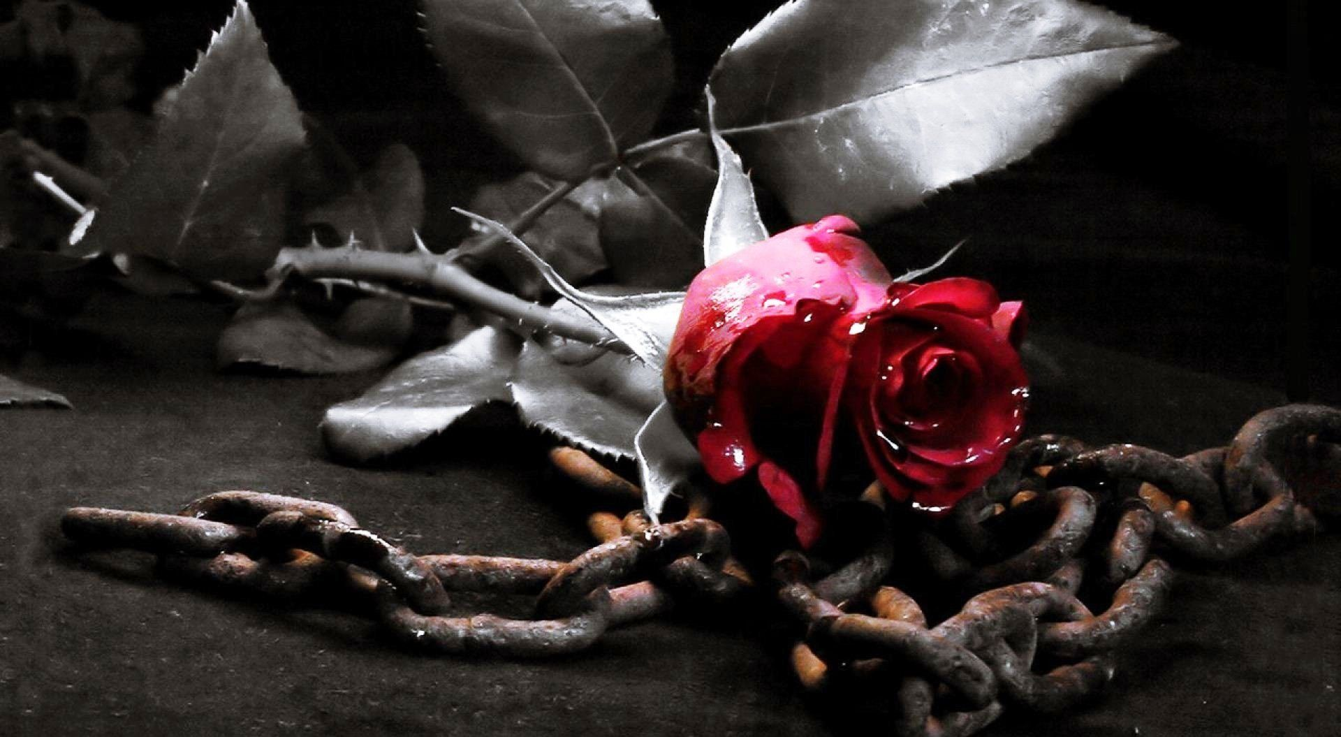 gothic love wallpapers top