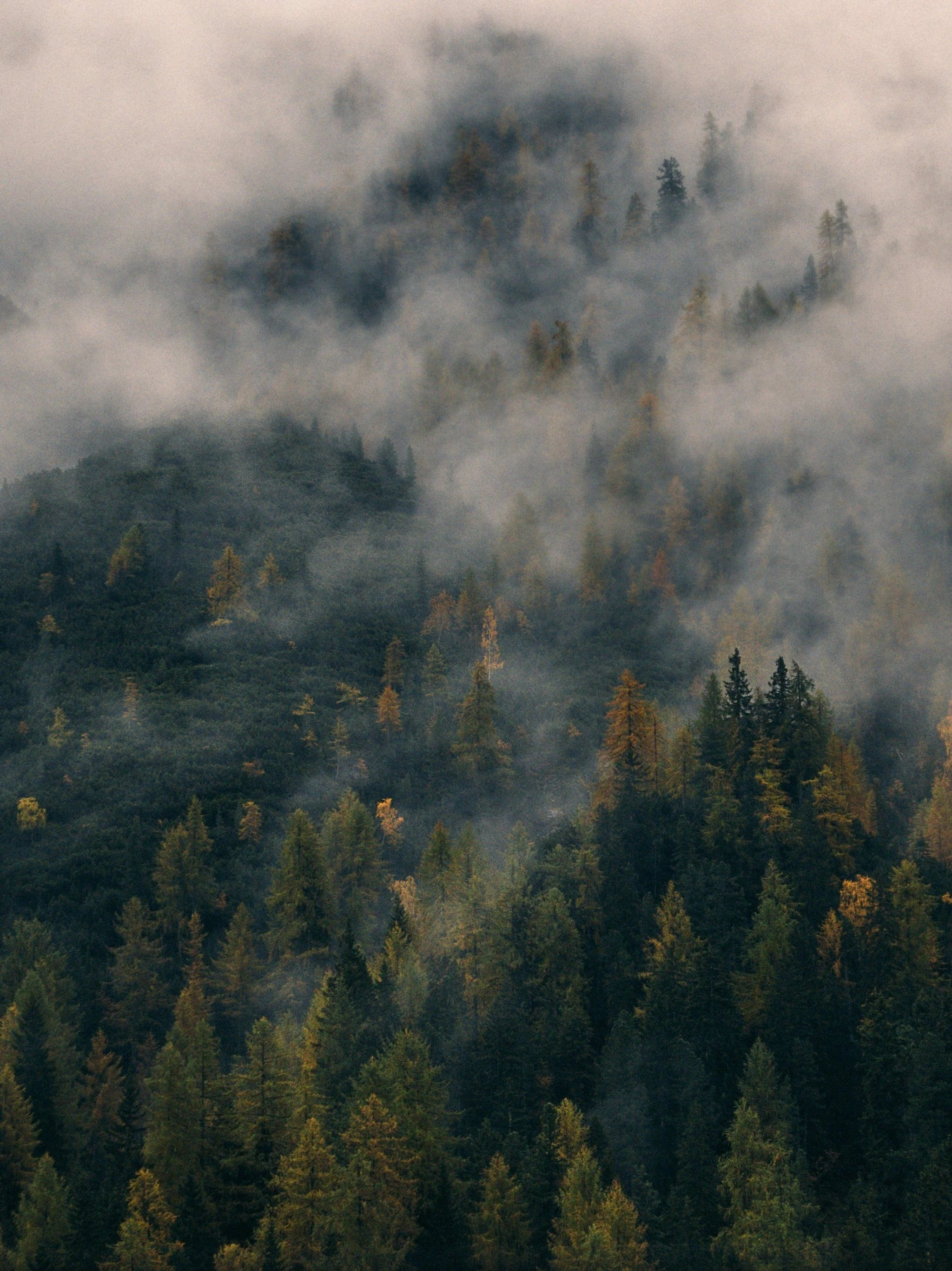 Aesthetic Foggy Forest Wallpaper : aesthetic, foggy, forest, wallpaper, Foggy, Forest, Wallpapers, Backgrounds, WallpaperAccess