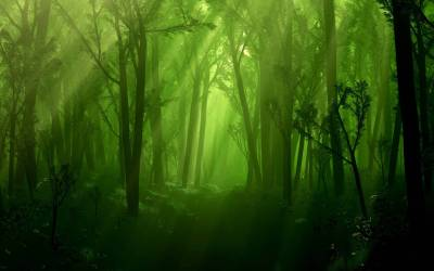 Magical Forest Wallpapers Top Free Magical Forest Backgrounds WallpaperAccess