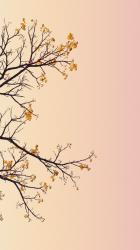 Pastel Minimalist Wallpapers Top Free Pastel Minimalist Backgrounds WallpaperAccess