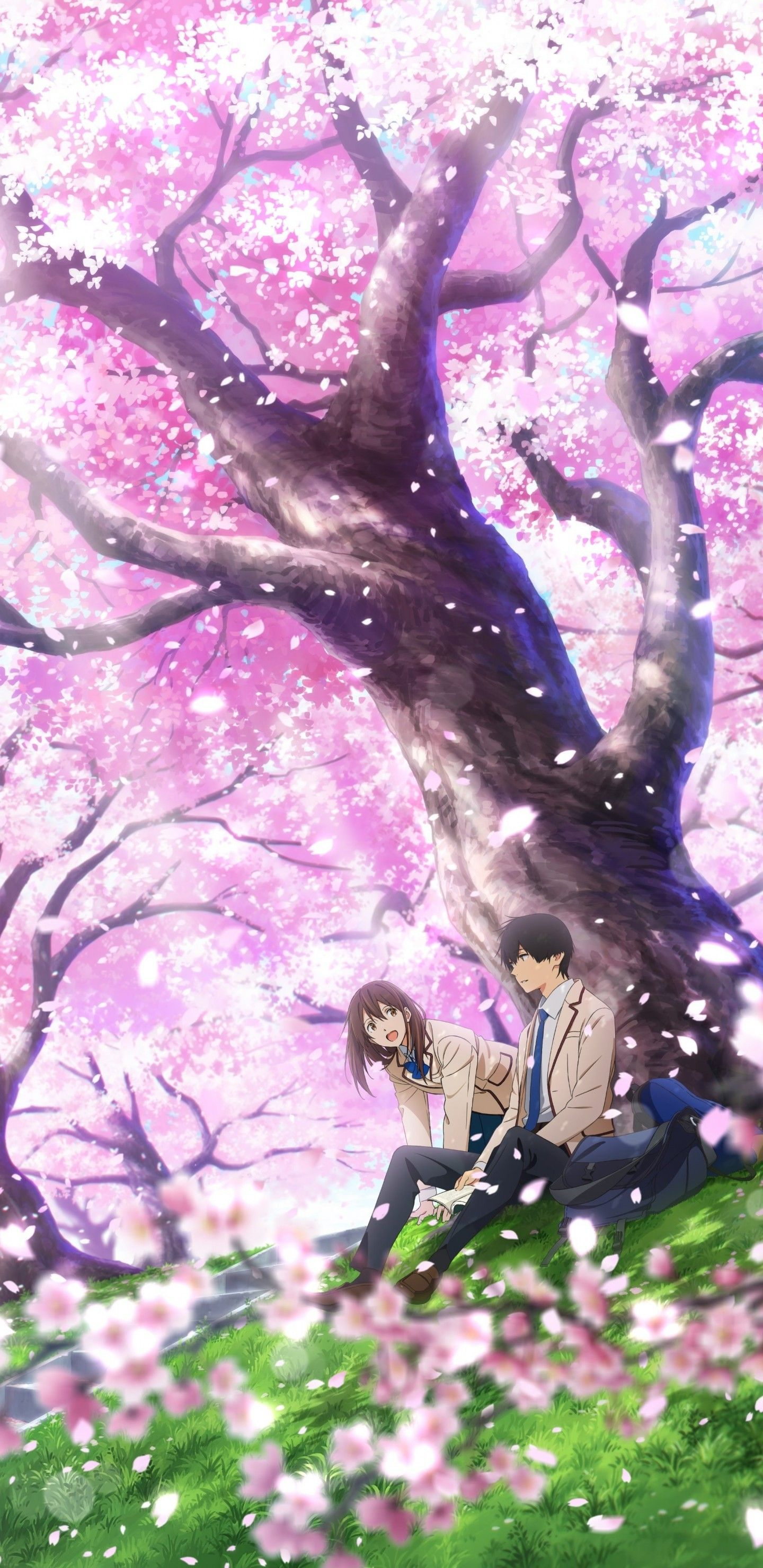 Download Anime Kimi No Suizou Wo Tabetai : download, anime, suizou, tabetai, Suizou, Tabetai, Wallpapers, Backgrounds, WallpaperAccess