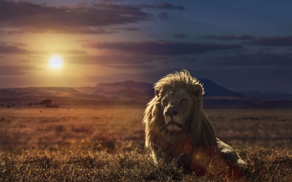 20 Trippy Lion Pictures And Ideas On Meta Networks