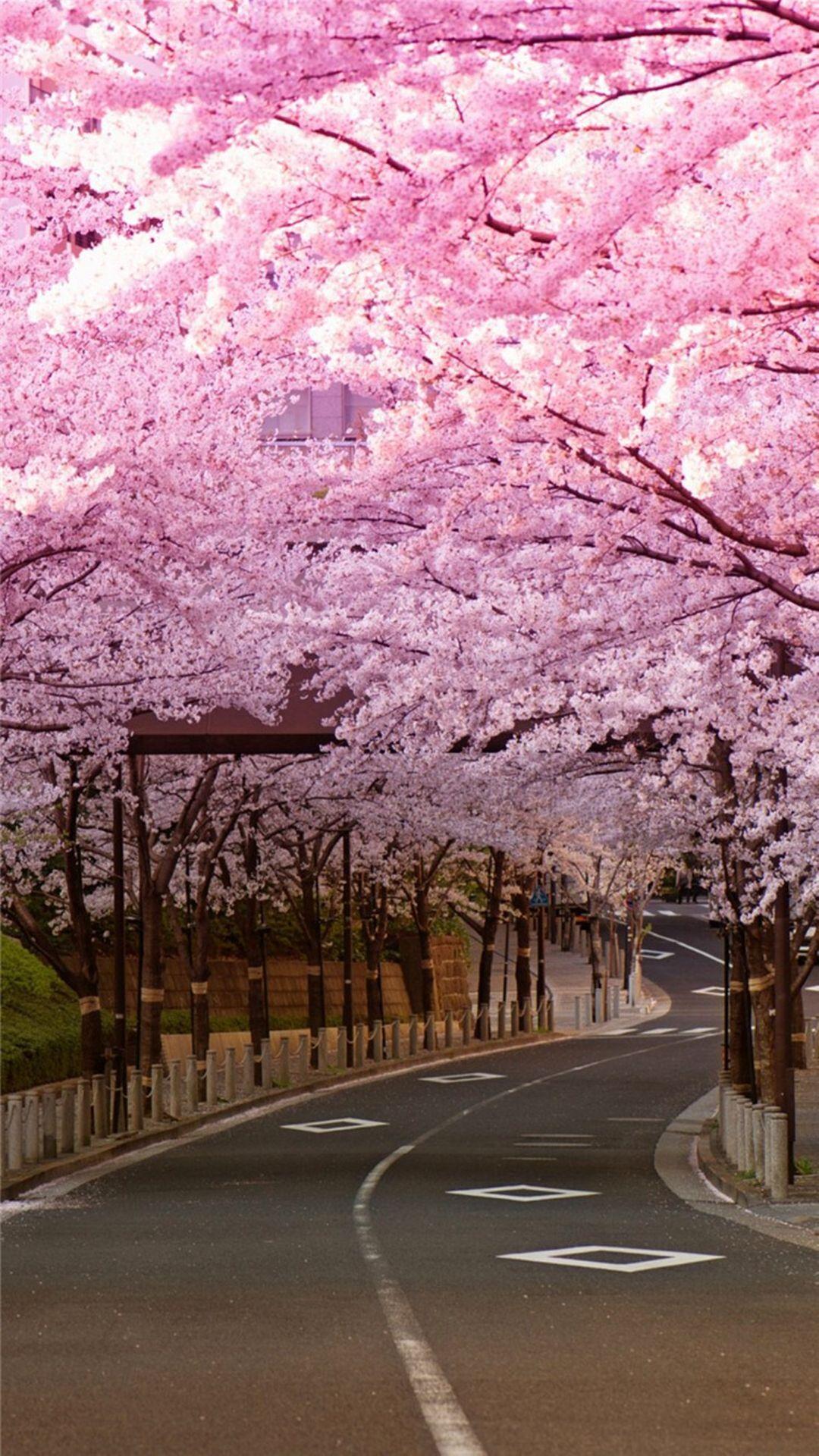 japanese cherry blossom iphone