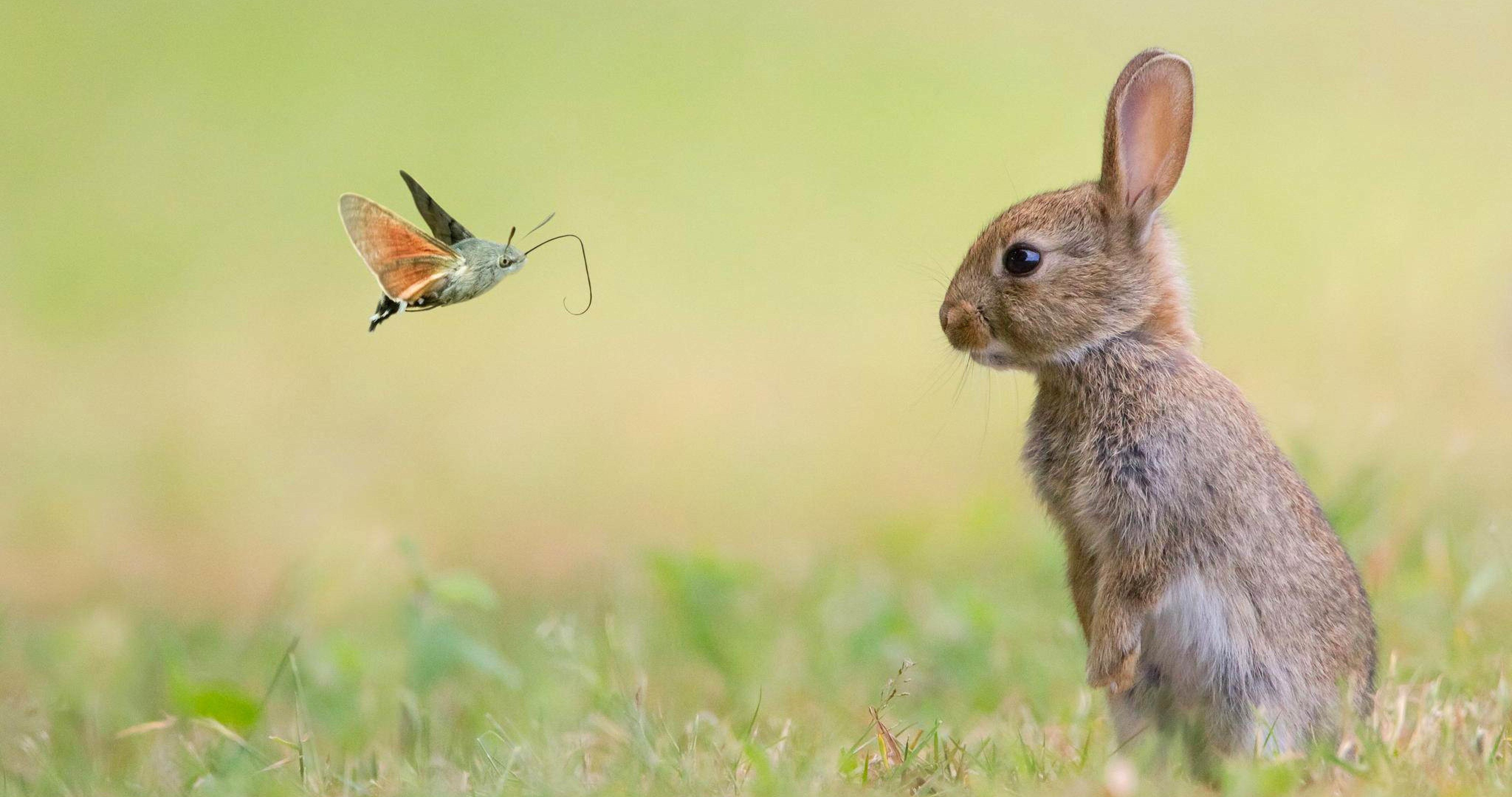 spring animals wallpapers top
