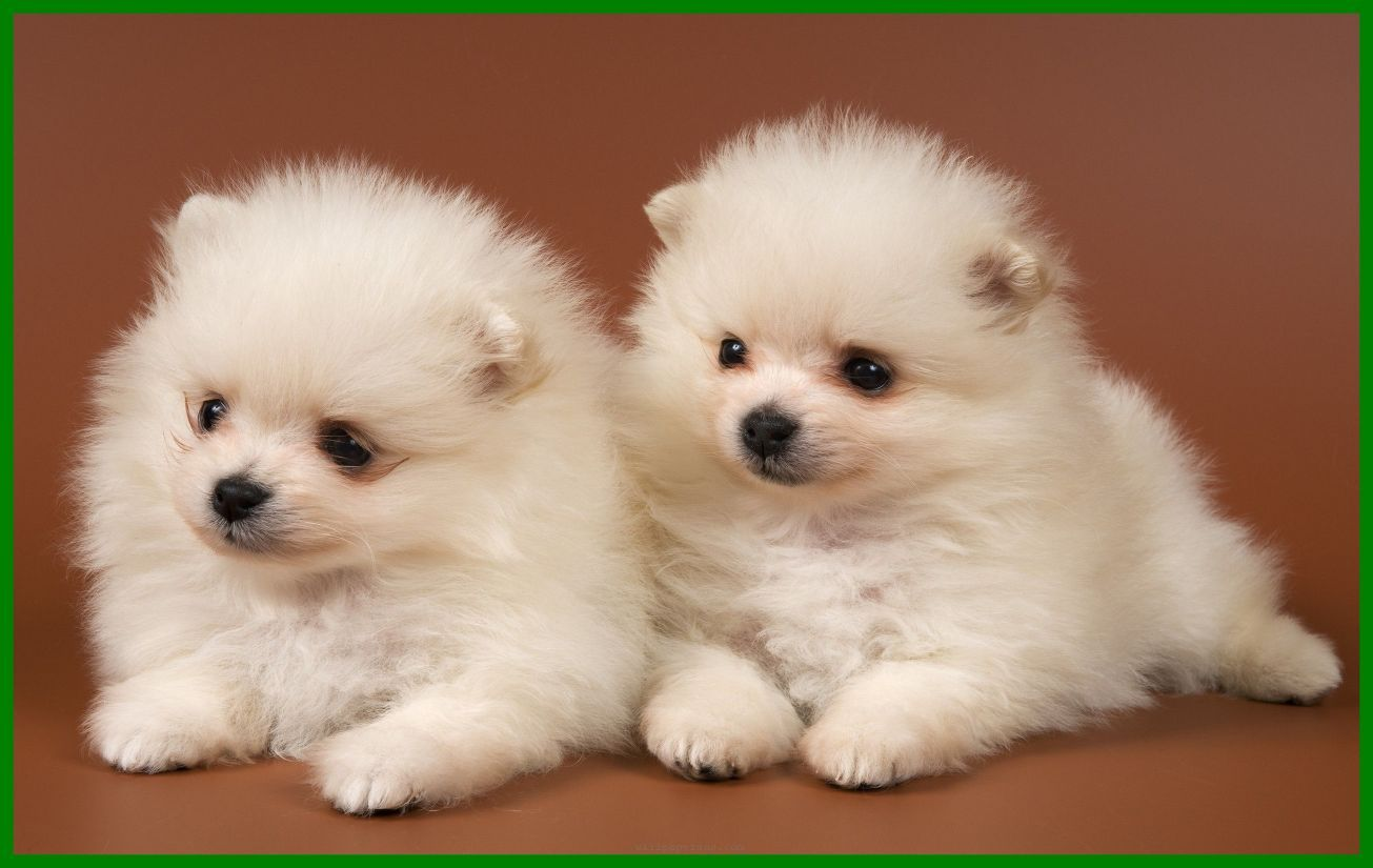 cute puppy wallpapers top