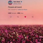 Harry Styles Pink Wallpapers Top Free Harry Styles Pink Backgrounds Wallpaperaccess