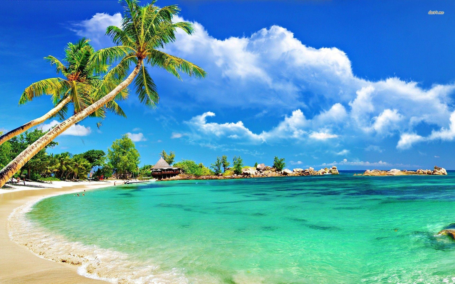 tropical beach wallpapers top