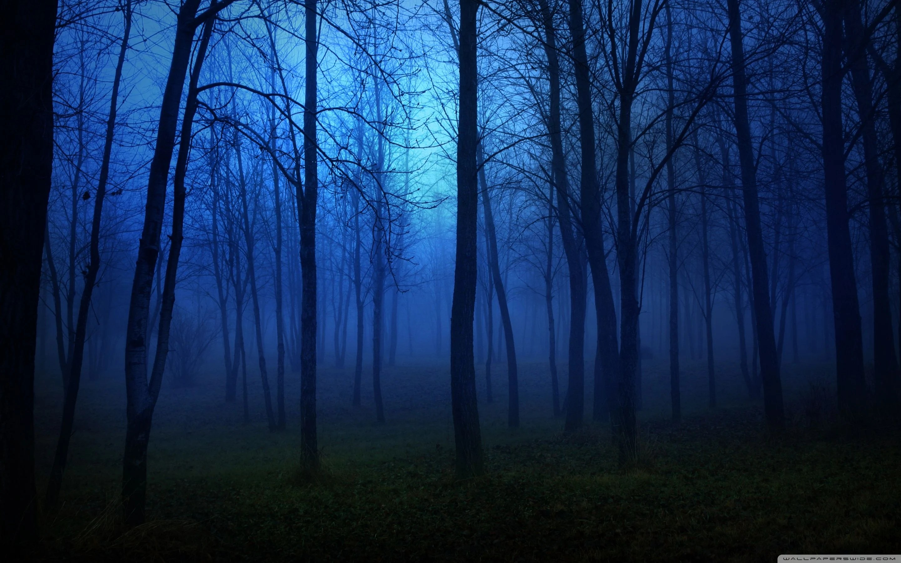 night forest wallpapers top