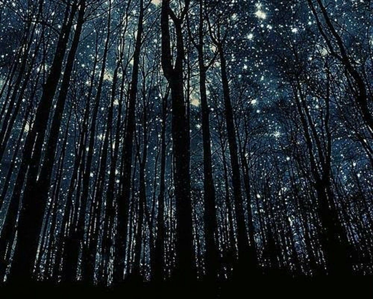3d Fireflies Live Wallpaper Night Forest Wallpapers Top Free Night Forest