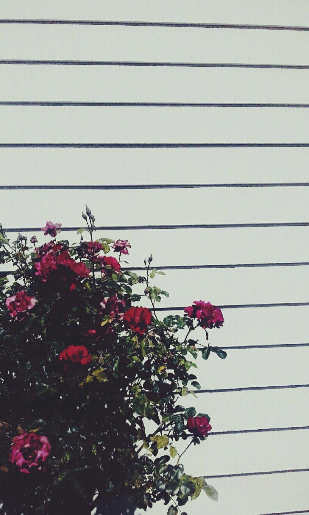 Grunge Tumblr Aesthetic : grunge, tumblr, aesthetic, Grunge, Tumblr, Aesthetic, Flower, Wallpapers, Backgrounds, WallpaperAccess