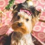 Cute Christmas Animal Wallpapers Top Free Cute Christmas Animal Backgrounds Wallpaperaccess