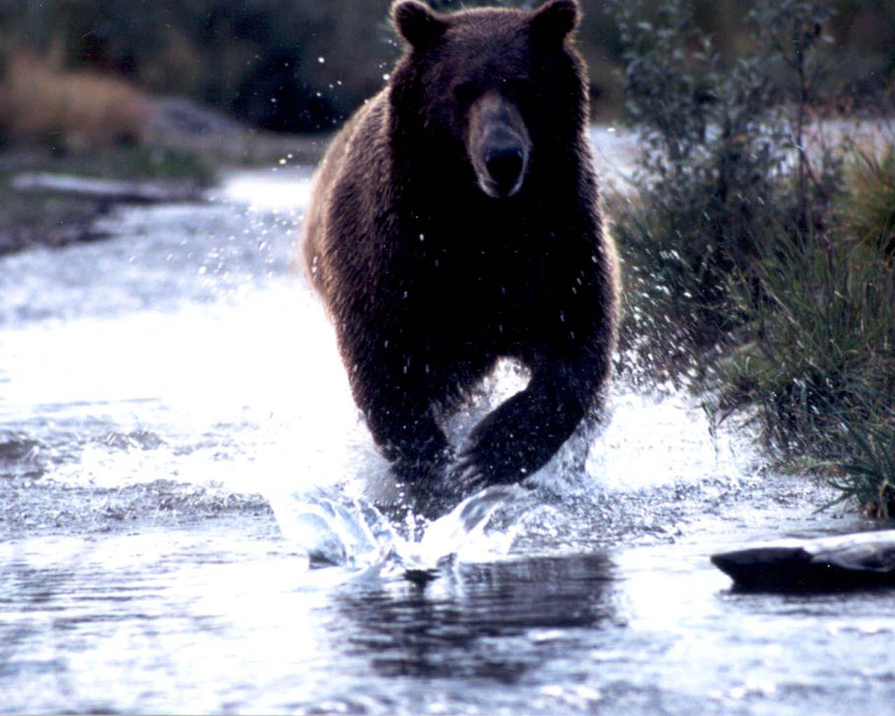 cool native american bear