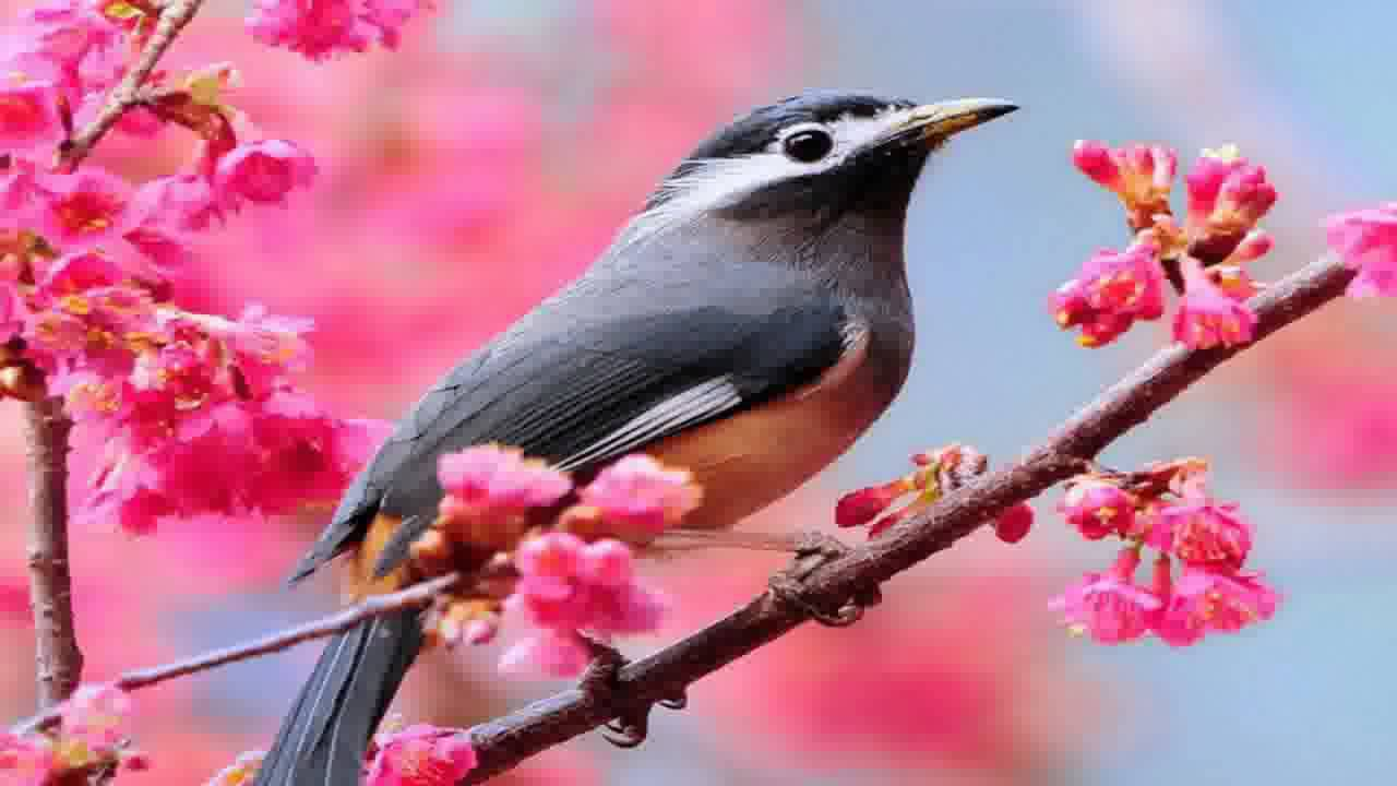 bird wallpapers top free