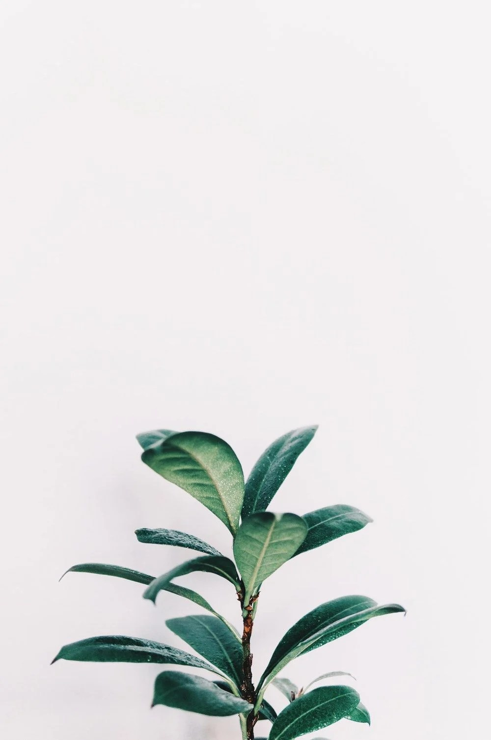 Minimalist Aesthetic Plant Wallpaper : minimalist, aesthetic, plant, wallpaper, Minimalist, Plant, Wallpapers, Backgrounds, WallpaperAccess
