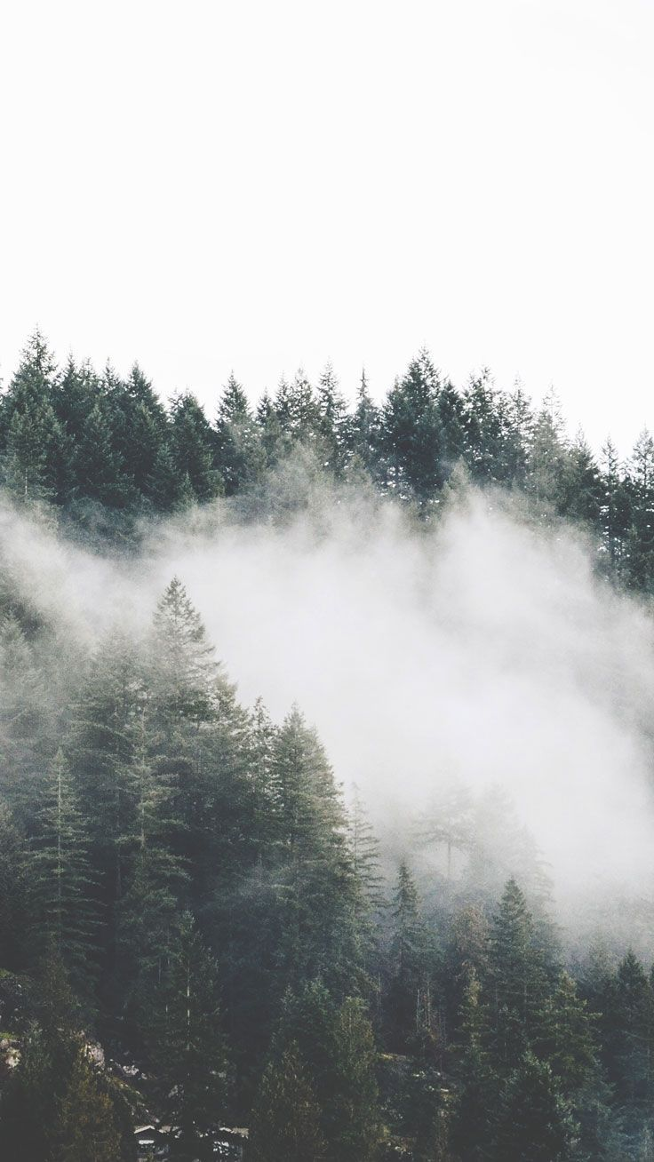 Aesthetic Foggy Forest Wallpaper : aesthetic, foggy, forest, wallpaper, IPhone, Wallpapers, Backgrounds, WallpaperAccess