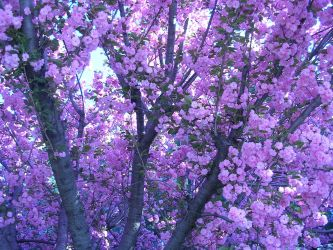 aesthetic backgrounds purple pastel lavender laptop flowers hd background wallpapers lilac ombre lean desktop awesome beete paulette defeated trees alone