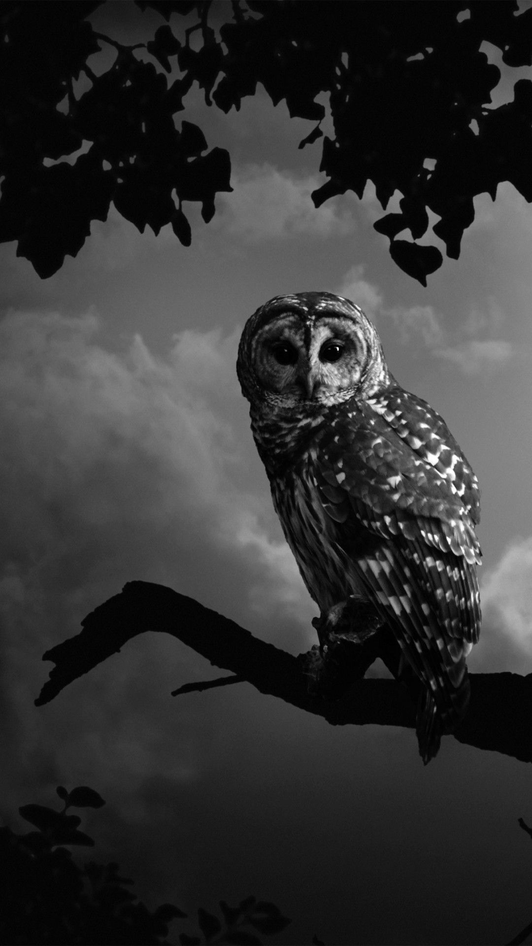Manly Iphone Wallpaper Black And White Owl Wallpapers Top Free Black And White