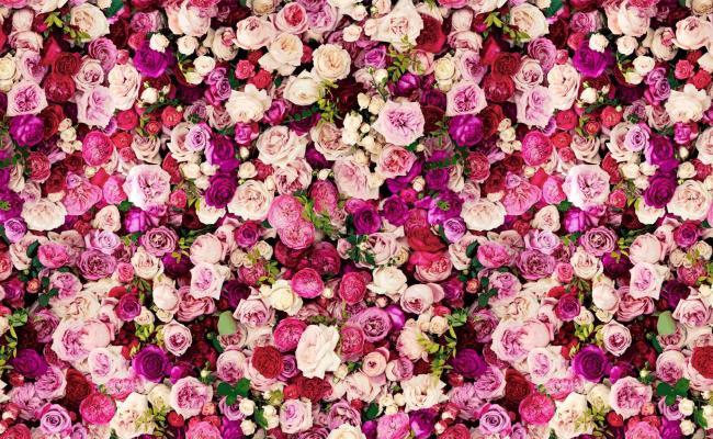 Pink Kate Spade Desktop Wallpapers Top Free Pink Kate