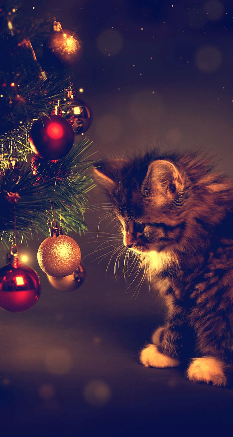 Christmas Cat Background : christmas, background, Christmas, IPhone, Wallpapers, Backgrounds, WallpaperAccess