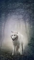 White Wolf iPhone Wallpapers Top Free White Wolf iPhone Backgrounds WallpaperAccess