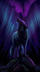 Galaxy Wolves Wallpapers Top Free Galaxy Wolves Backgrounds WallpaperAccess