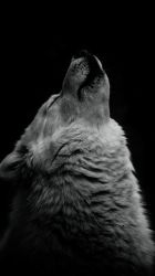 wolf iphone wallpapers hd moon lobo phone gray backgrounds fondo earth winter lie predator pantalla quotes aesthetic wallpaperaccess animales wolves