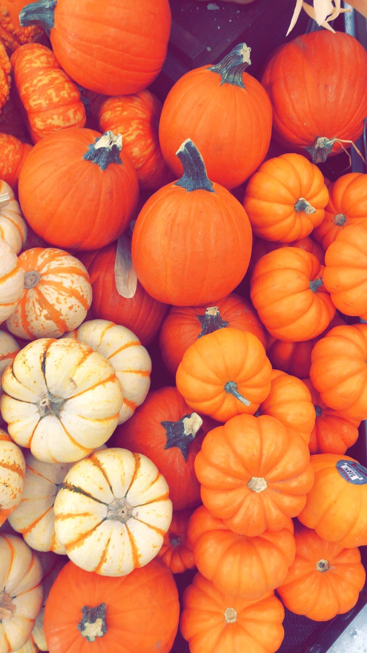 Fall Harvest Desktop Wallpaper Autumn Pumpkin Iphone Wallpapers Top Free Autumn Pumpkin