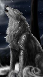 galaxy wolf cute wallpapers wallpaperaccess backgrounds