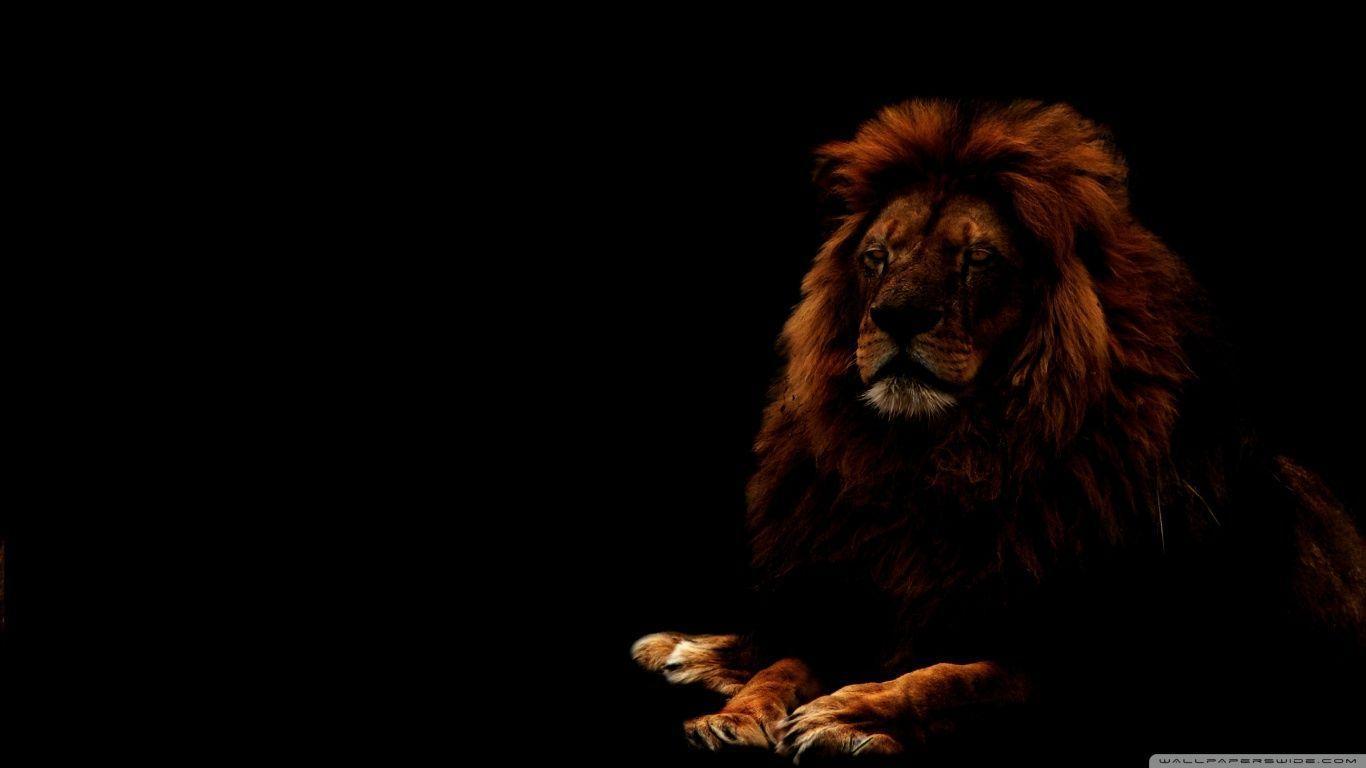 4k ultra hd lions