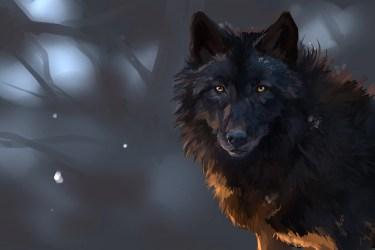 Dark Wolf Wallpapers Top Free Dark Wolf Backgrounds WallpaperAccess