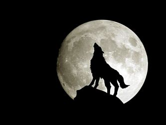 Wolf Moon Wallpapers Top Free Wolf Moon Backgrounds WallpaperAccess