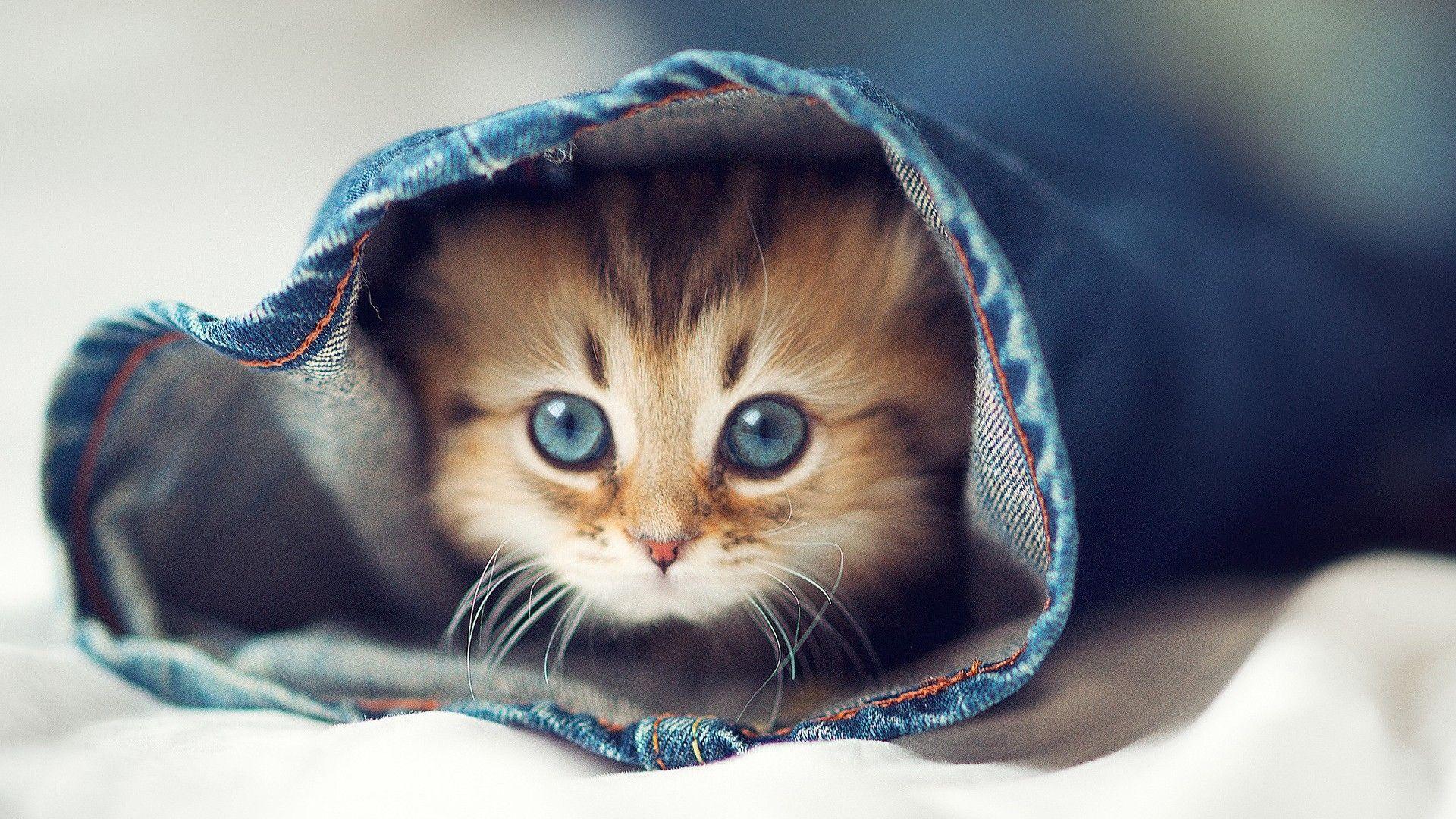 Funny Kitten Backgrounds