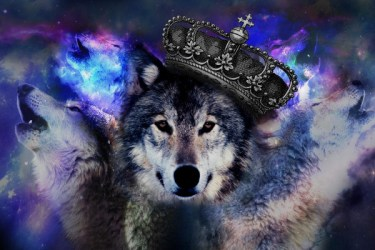Moon Galaxy Wolf Wallpaper