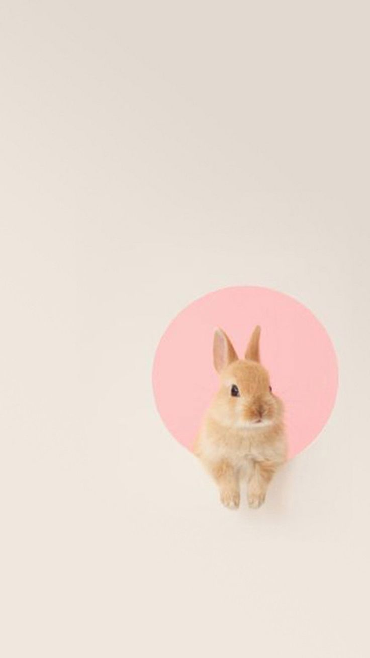 Cute Rabbits Hd Wallpapers Animals Wallpapers Iphone Rabbit Minimalist