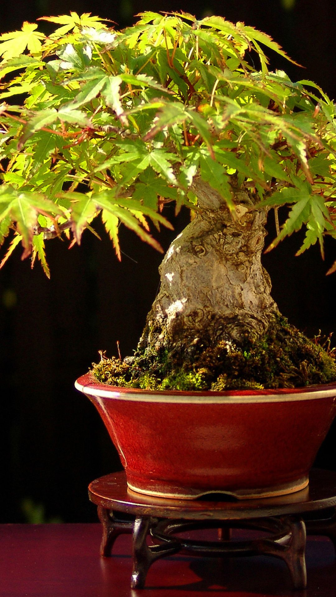 Bonsai Wallpaper : bonsai, wallpaper, Bonsai, IPhone, Wallpapers:, Images, WallpaperBoat