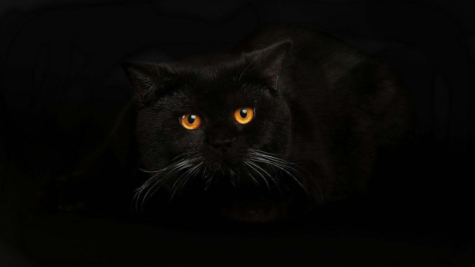 Black Cat Wallpaper Zedge