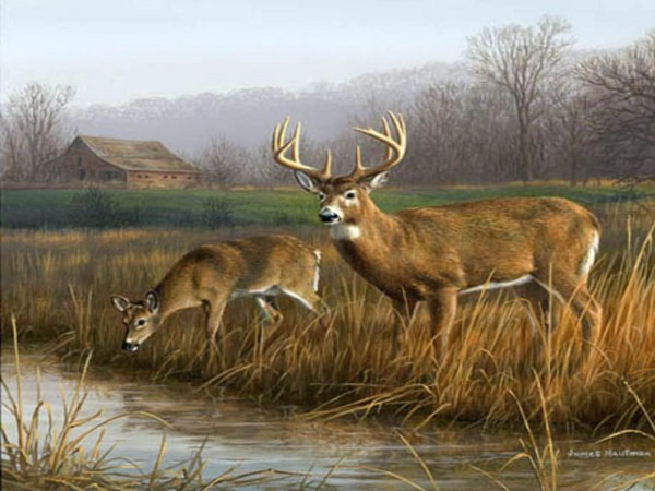 Deer Hunting Whitetail Buck