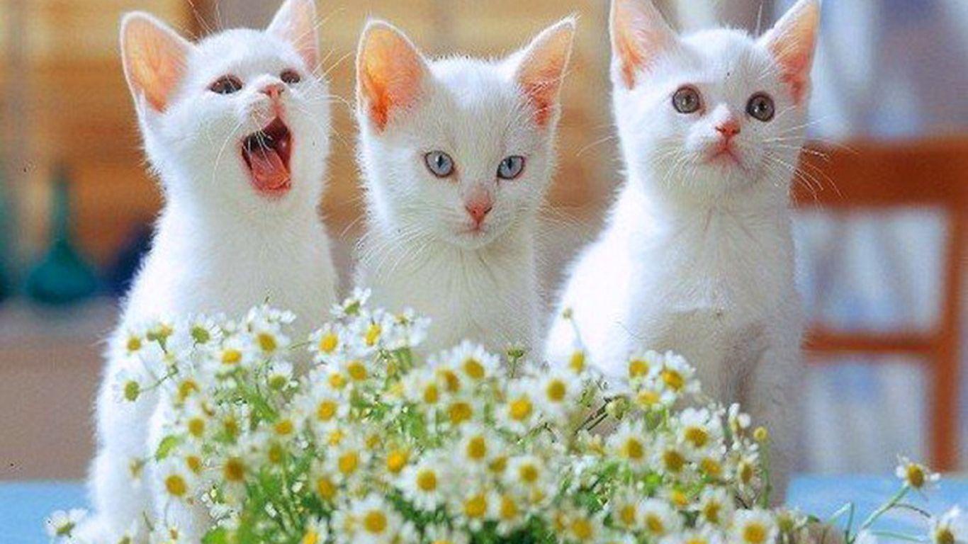 Really Cute Desktop Wallpaper Free Cute Kitten Wallpapers Wallpaper Cave