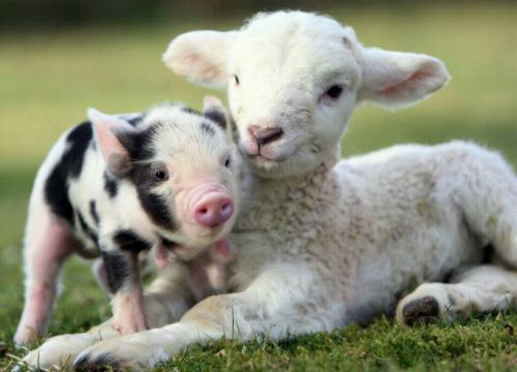 Image result for cute farm animals